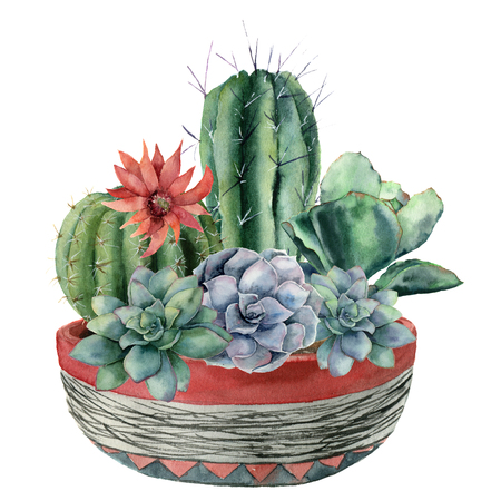 Watercolor cactus with succulent in a pot. Hand painted cereus, echeveria, echinocactus grusonii with red and blue flowers isolated on white background. Illustration for design, fabric or background.