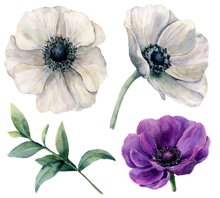 Watercolor white and violet anemone set. Hand painted flowers with eucalyptus leaves isolated on white background. Natural illustration for design, print, fabric or background.
