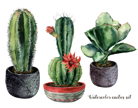 Watercolor set with cactus and flowers in a pot composition. Hand painted cereus and echeveria with red flower isolated on white background. Illustration for design, print, fabric or background.
