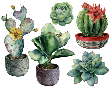 Watercolor set with cactus in a pot and flowers composition. Hand painted cereus, opuntia and echeveria with succulent isolated on white background. Illustration for design, print, fabric, background.