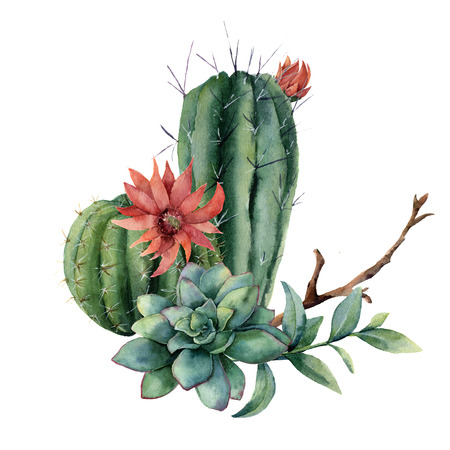 Watercolor cactus bouquet with eucalyptus leaves. Hand painted cereus, red flower, green succulent, feather and branch isolated on white background. Illustration for design, print, fabric, background.