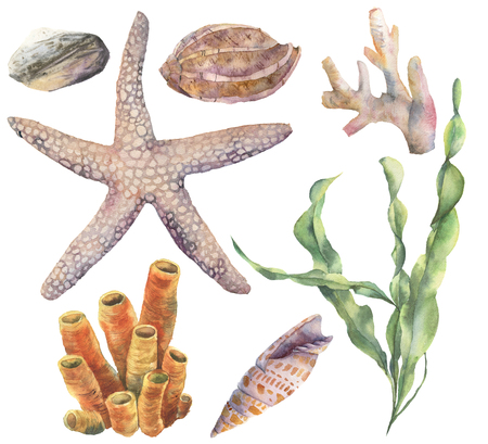 Watercolor underwater set. Hand painted laminaria, corals, starfish, sea pebble and seashells isolated on white background. Aquatic illustration  for design, print or background. Stock Photo