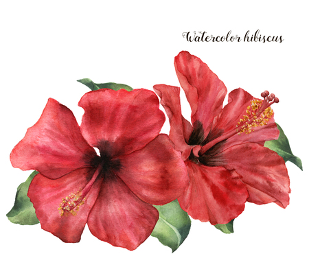 Watercolor hibiscus bouquet. Hand painted exotic floral illustration with red flower and leaves isolated on white background. Tropic flower for design, print, fabric or background. Stok Fotoğraf - 101257471