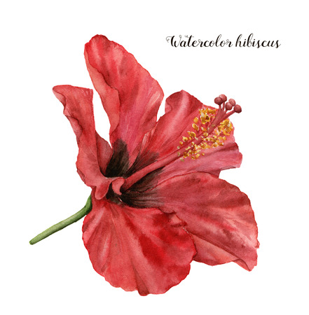 Watercolor hibiscus. Hand painted exotic floral illustration with red flower isolated on white background. Tropic flower for design, print, fabric or background.