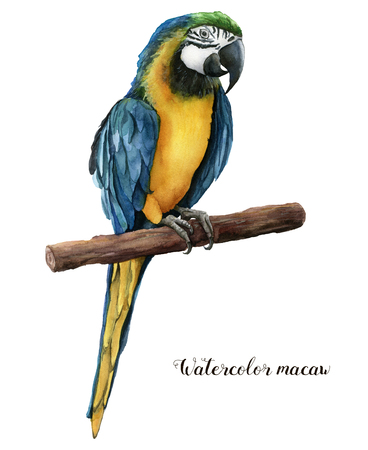 Watercolor beautiful parrot. Hand painted blue-and-yellow parrot isolated on white background. Nature illustration with bird. For design, print or background. Stock Photo