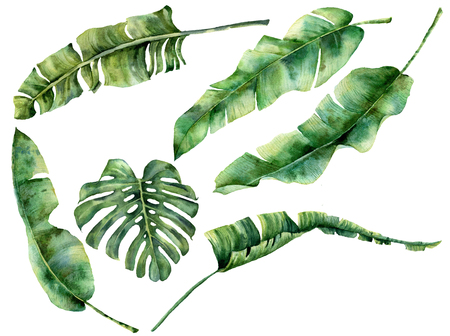 Watercolor set with juicy tropical tree leaves. Hand painted monstera, banana and palm greenery exotic branch on white background. Botanical illustration for design, fabric, print or background. Stockfoto