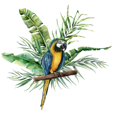 Watercolor parrot with tropical leaves. Hand painted parrot with monstera, banana and palm greenery branch isolated on white background. Nature illustration with bird. For design, print or background.