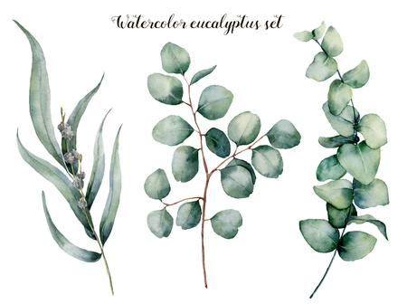 Watercolor eucalyptus realistic set. Hand painted baby, seeded and silver dollar eucalyptus branch isolated on white background. Floral illustration for design, print, fabric or background. Banco de Imagens