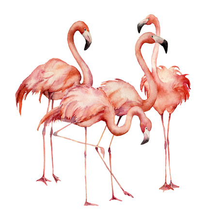 Watercolor flamingo group set. Hand painted bright exotic birds isolated on white background. Wild life illustration for design, print, fabric or background.
