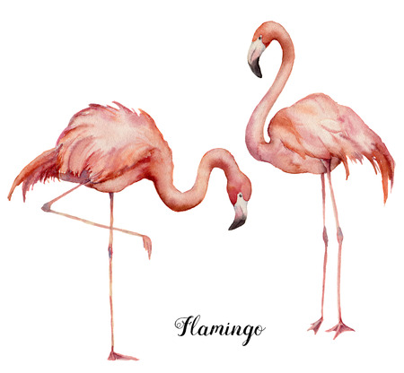 Watercolor two pink flamingo set. Hand painted bright exotic birds isolated on white background. Wild life illustration for design, print, fabric or background.
