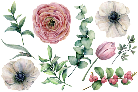 Watercolor flower set with eucalyptus leaves. Hand painted anemone, ranunculus, tulip, berries and branch isolated on white background. Natural illustration for design, print, fabric or background. Stockfoto