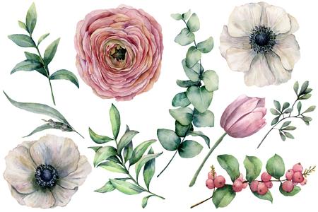Fiore dell'acquerello con foglie di eucalipto. Anemone dipinto a mano, ranuncolo, tulipano, bacche e ramo isolato su priorità bassa bianca. Illustrazione naturale per design, stampa, tessuto o sfondo.