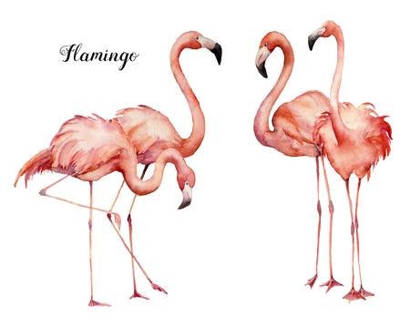 Watercolor four pink flamingo group set. Hand painted bright exotic birds isolated on white background. Wild life illustration for design, print, fabric or background.
