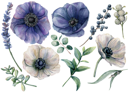 Watercolor white and blue floral set. Hand painted blue and white anemone, brunia berry, eucalyptus leaves, lavender, succulent isolated on white background. Illustration for design, print or fabric.