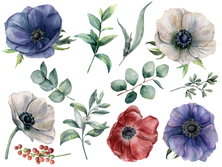 Watercolor eucalyptus and anemone floral set. Hand painted blue, red and white anemone, berry, eucalyptus leaves and branches isolated on white background. Illustration for design, print or fabric. Stock Photo