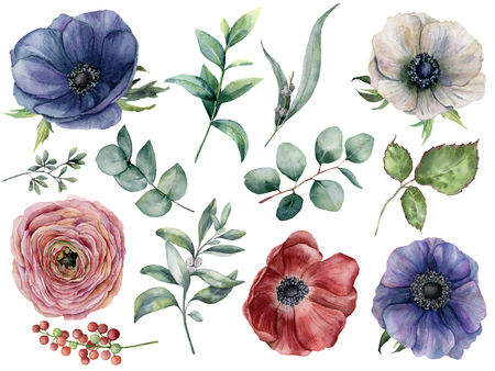 Watercolor eucalyptus, anemone and ranunculus floral set. Hand painted blue, red and white anemone, berry, eucalyptus leaves and branches isolated on white background. Illustration for design, print. Stock Photo