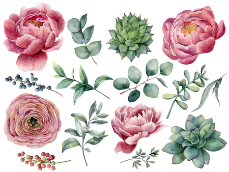 Watercolor peony, succulent and ranunculus floral set. Hand painted red and blue berry, eucalyptus leaves isolated on white background. Illustration for design, print. Stock Photo