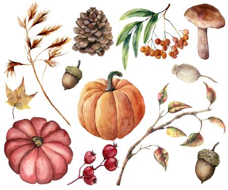 Aquarel herfst planten set. Handgeschilderde pompoenen, bladeren, paddestoel, lijsterbes, appel, kegel, eikel geïsoleerd op een witte achtergrond. Floral illustratie voor ontwerp, print of achtergrond