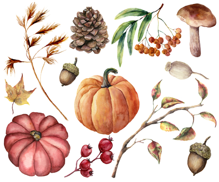 Watercolor autumn plants set. Hand painted pumpkins, leaves, mushroom, rowan, apple, cone, acorn isolated on white background. Floral illustration for design, print or background