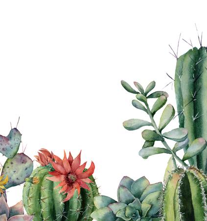 Watercolor card with flowering cactuses and succulents. Hand painted exotic floral print isolated on white background. Botanical illustration for design or background. Stock Photo