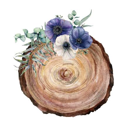 Watercolor cross section of a tree with blue and white anemone bouquet. Hand painted flowers and eucaliptus leaves on white background. Illustration for design, print, fabric or background.