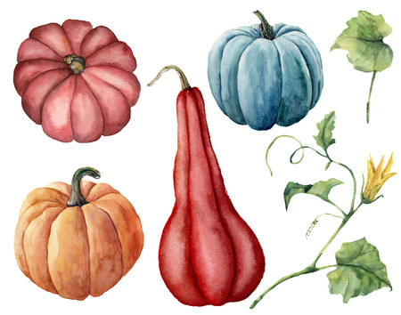 Watercolor set with pumpkins. Hand painted red, blue and orange pumpkins with leaves and branches isolated on white background. Autumn harvest. Botanical illustration for design, print.