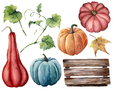 Watercolor set with pumpkins, wood box. Hand painted red, blue and orange pumpkins with leaves and branches isolated on white background. Autumn harvest. Botanical illustration for design, print.