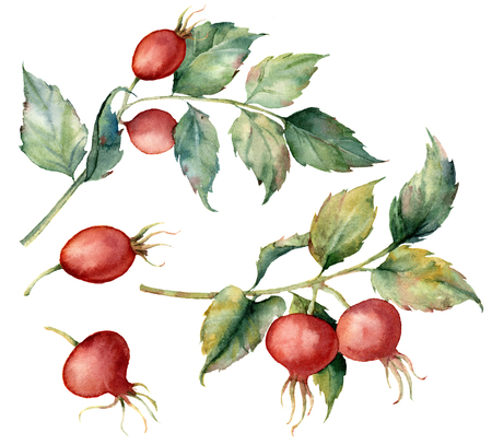 Watercolor set with two branch of Dog rose, red berries and green leaves. Hand painted briar and hips isolated on white background. Illustration for design, fabric, print or background. Stock Photo