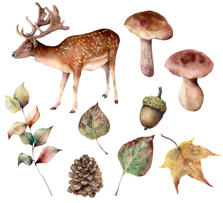 Aquarellherbstwald mit Hirschsatz. Handbemalte Tannenzapfen, Eichel, Hase, Pilz, gelbe Blätter und Zweig lokalisiert auf weißem Hintergrund. Botanische Illustration für Design, Druck oder Hintergrund.