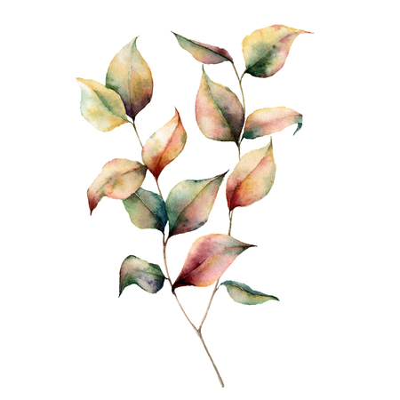 Watercolor autumn plant bouquet. Hand painted leaves and branch isolated on white background. Botanical illustration for design. Fall print.