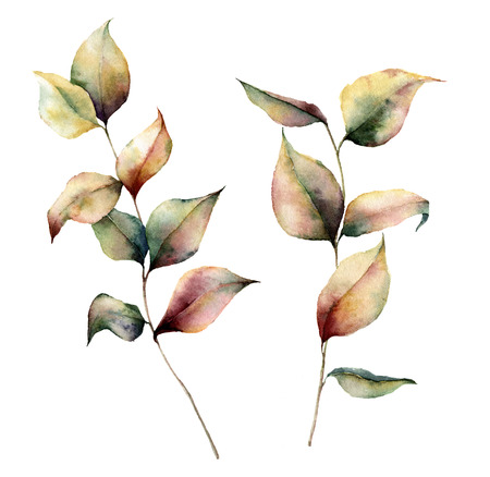 Watercolor autumn plant set. Hand painted leaves and branch isolated on white background. Botanical illustration for design. Fall print.