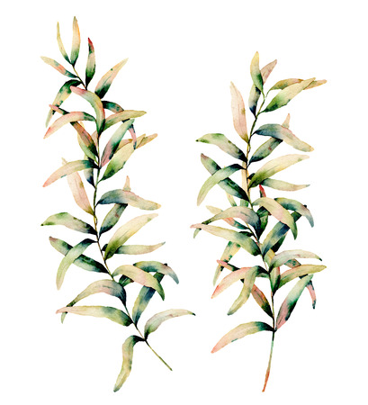 Watercolor autumn grass set. Hand painted green and yellow branch of grass isolated on white background. Botanical illustration for design, background and fabric. Fall print. Stock fotó