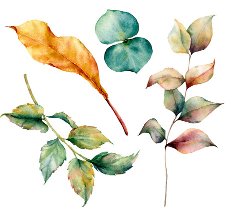 Watercolor set with autumn leaves and grass branch. Hand painted grass and dogrose branch, eucaliptus and yellow leaves isolated on white background. Illustration for design, print or background.