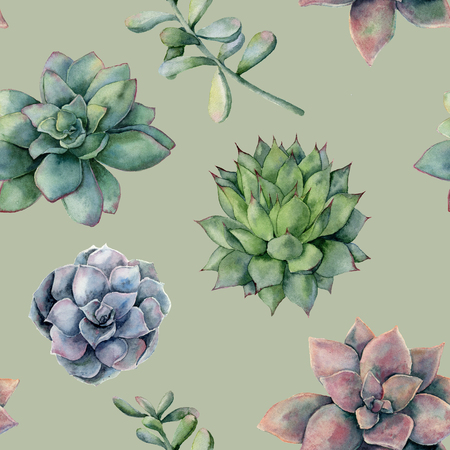 Watercolor pattern with colorful succulents. Hand painted ornament with cactuses isolated on white background. Floral illustration for design, print or background. Banco de Imagens