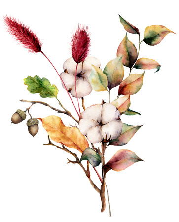 Watercolor autumn bouquet with plants and flowers. Hand painted cotton flowers, lagurus, acorn, leaves and branches isolated on white background. Floral illustration for fall design, print. Zdjęcie Seryjne