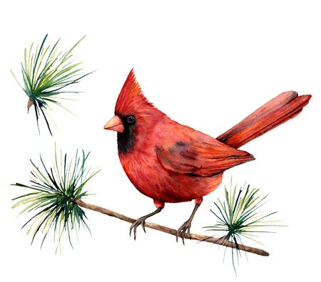 Aquarel vogel rode kardinaal. Handgeschilderde wenskaart illustratie met vogel en tak geïsoleerd op een witte achtergrond. Voor ontwerp, print of achtergrond. Stockfoto