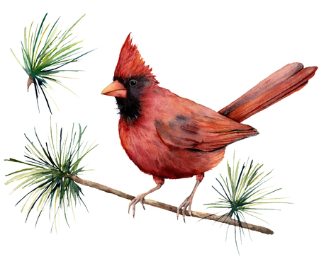 Watercolor bird cardinal. Hand painted greeting card illustration with red bird and branch isolated on white background. For design, print or background.