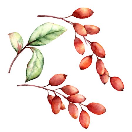 Watercolor barberry set. Hand painted berries, leaves and branches isolated on white background. Botanical illustration for design, print or background. Christmas berries. Stock Illustration - 112241255