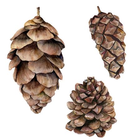 Watercolor pine cones set. Hand painted fir cones isolated on white background. Nature illustration. Holiday symbol for design, print. Banco de Imagens