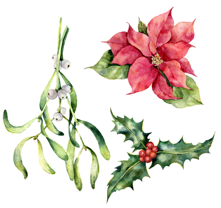 Watercolor Christmas plants. Hand painted poinsettia, mistletoe, holly isolated on white background. Holiday symbol. Botanical illustration for design, print.
