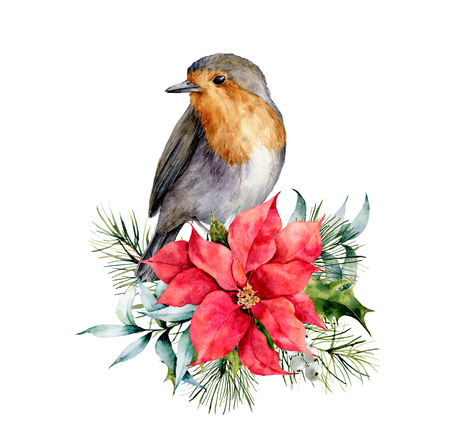 Watercolor Christmas card with robin and winter design. Hand painted bird with poinsettia, mistletoe, fir branch and holly isolated on white background. Holiday symbol for design, print. Standard-Bild