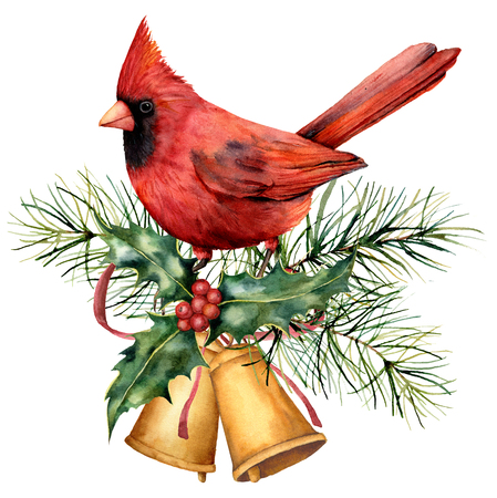 Watercolor Christmas card with red cardinal and winter design. Hand painted bird with bells, holly, red bow, berries, fir branch isolated on white background. Holiday symbol for design, print.