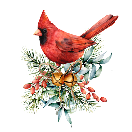 Watercolor Christmas card with red cardinal and winter plants. Hand painted bird with bells, holly, red bow, berries, fir and eucalyptus branch isolated on white background. Holiday symbol for design.