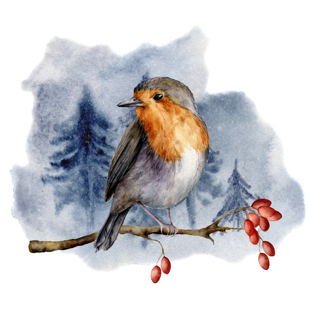 Watercolor robin sitting on tree branch in forest. Hand painted winter illustration with bird  and dog rose berries isolated on white background.  Holiday clip art for design, print. Christmas card.
