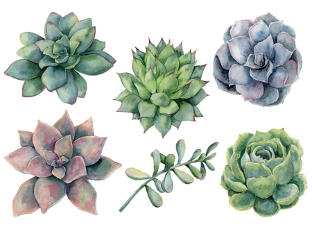 Watercolor succulents set. Hand painted green, violet, pink cacti isolated on white background.  Botanical illustration for design, print. Green plants Stock Photo