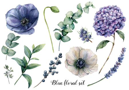 Hand painted blue floral elements. Watercolor botanical illustration with anemone, hydrangea flowers, lavender, juniper, berries and eucalyptus leaves isolated on white background.