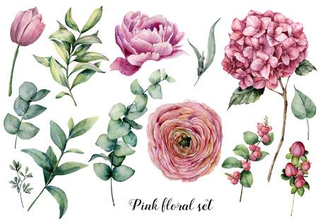Handgemalte florale Elemente. Aquarell botanische Illustration mit Ranunkeln, Tulpen, Pfingstrosen, Hortensienblüten, Beeren und Eukalyptusblättern einzeln auf weißem Hintergrund. Naturobjekte für Design Standard-Bild