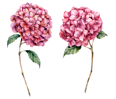 Watercolor pink hydrangea set. Hand painted flowers with leaves and branch isolated on white background. Nature botanical illustration for design, print. Realistic delicate plant.