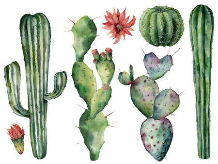 Watercolor flowers and cacti set. Hand painted dessert plants isolated on white background. Botanical illustration for design, print or card