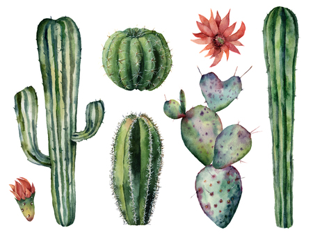 Watercolor cacti set. Hand painted dessert plants with flowers isolated on white background. Botanical illustration for design, print or card